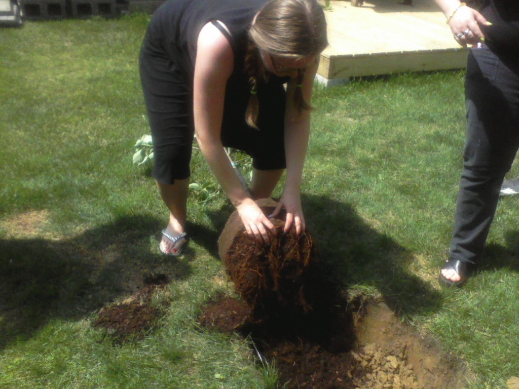 Planting our beltane tree