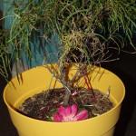 Beltane Tree